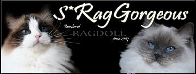 Klösträd och Ragdoll katter