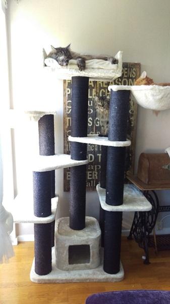 Klösträdet Maine Coon Fantasi creme-svart