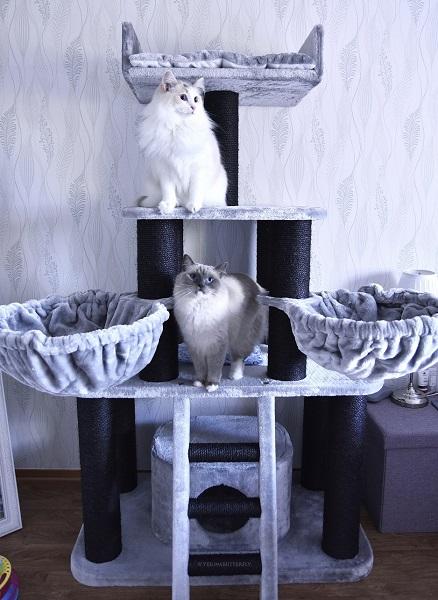 Klösträdet Panter ljusgrå-svart
